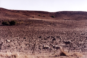 Monaro under drought, summer 2002