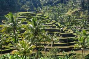 Bali_panorama