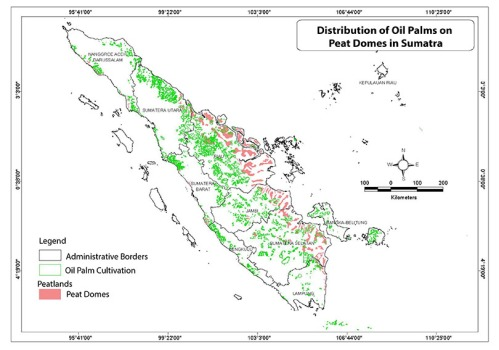 Oil palm map