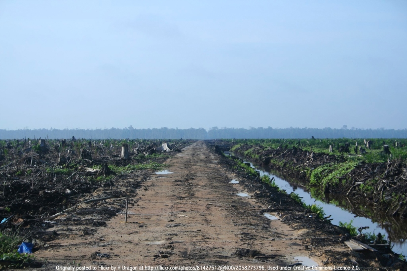 A palm oil concession in Indonesia's Riau Province